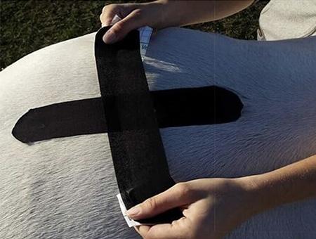kinesio taping sacro iliaque cheval